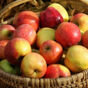 It is fall. It is apple-picking and pediatric dentist visit time.  (Image courtesy Alice Popkorn on Flickr via CC BY-ND 2.0 Generic License)